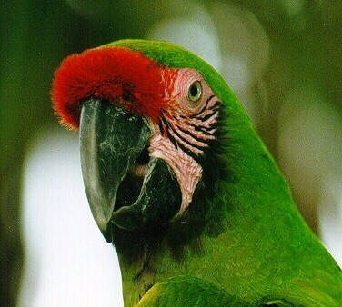 La población es apreciable pero no todas las aves pueden volar libres ...