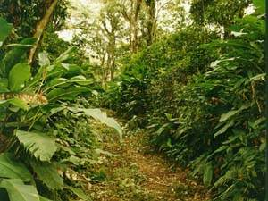 selva-montana.jpg