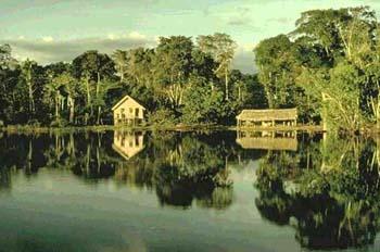 amazonia-3.jpg