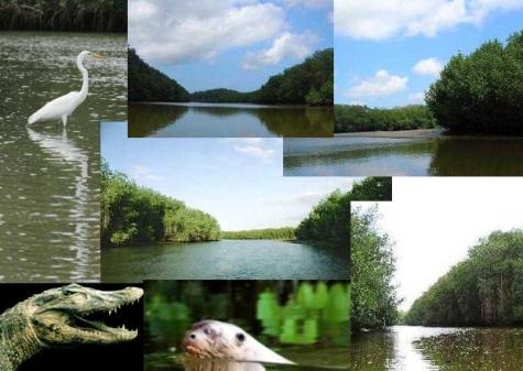 Diversas vistas de los manglares de Tumbes