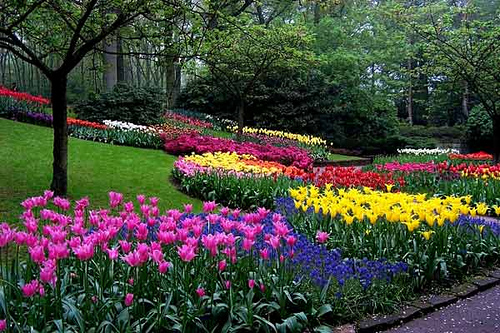 Diferentes sitios de holanda paraconocer for Plantas para jardin