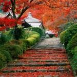 Jardines de Kyoto