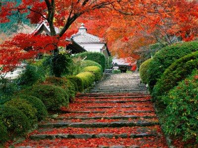 Cita Sorpresa [PRIV] Kyoto1