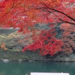 Paseo por el Río Kamo en Kyoto