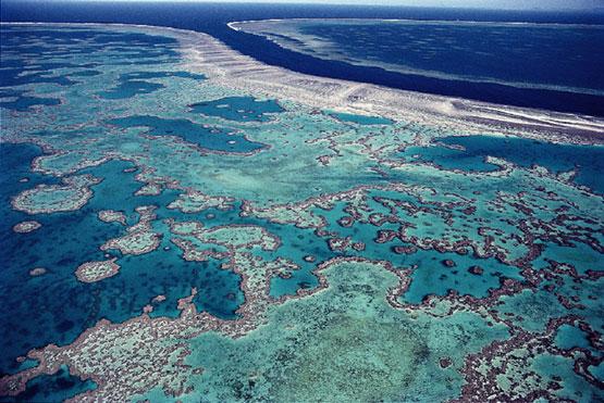Bran barrera de arrecifes